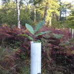Photo of sapling emerging from a tube
