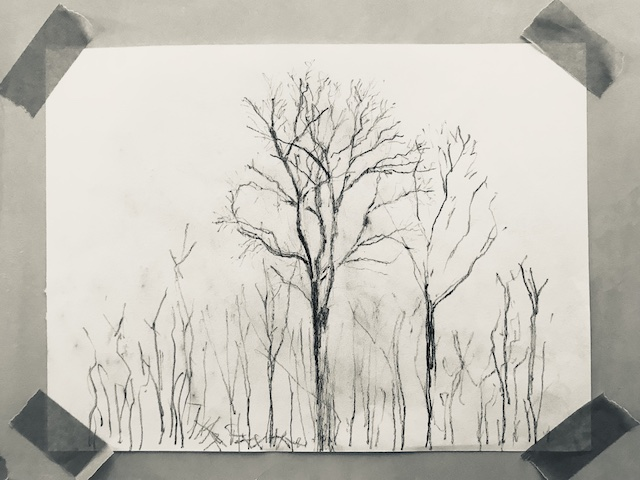 Pencil sketch of an ash tree at Hazel Hill wood to illustrate a post about connection with nature through drawing